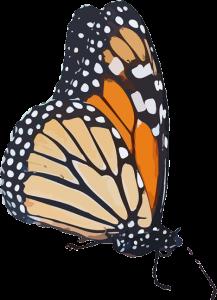 MonarchClip