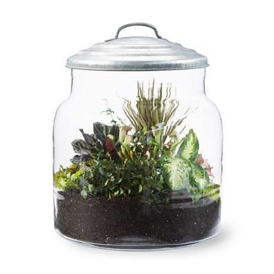 http://suburbanlg.com/wordpress/wp-content/uploads/Terrarium-Large_551A79E3-2.jpg