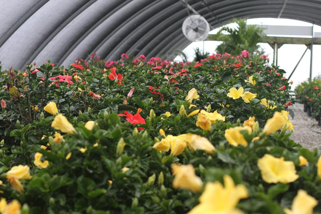 K-7 & Prairie Star Pkwy – Suburban Lawn & Garden