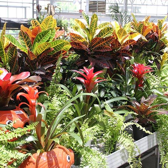 Tropical Plants Suburban Lawn Garden